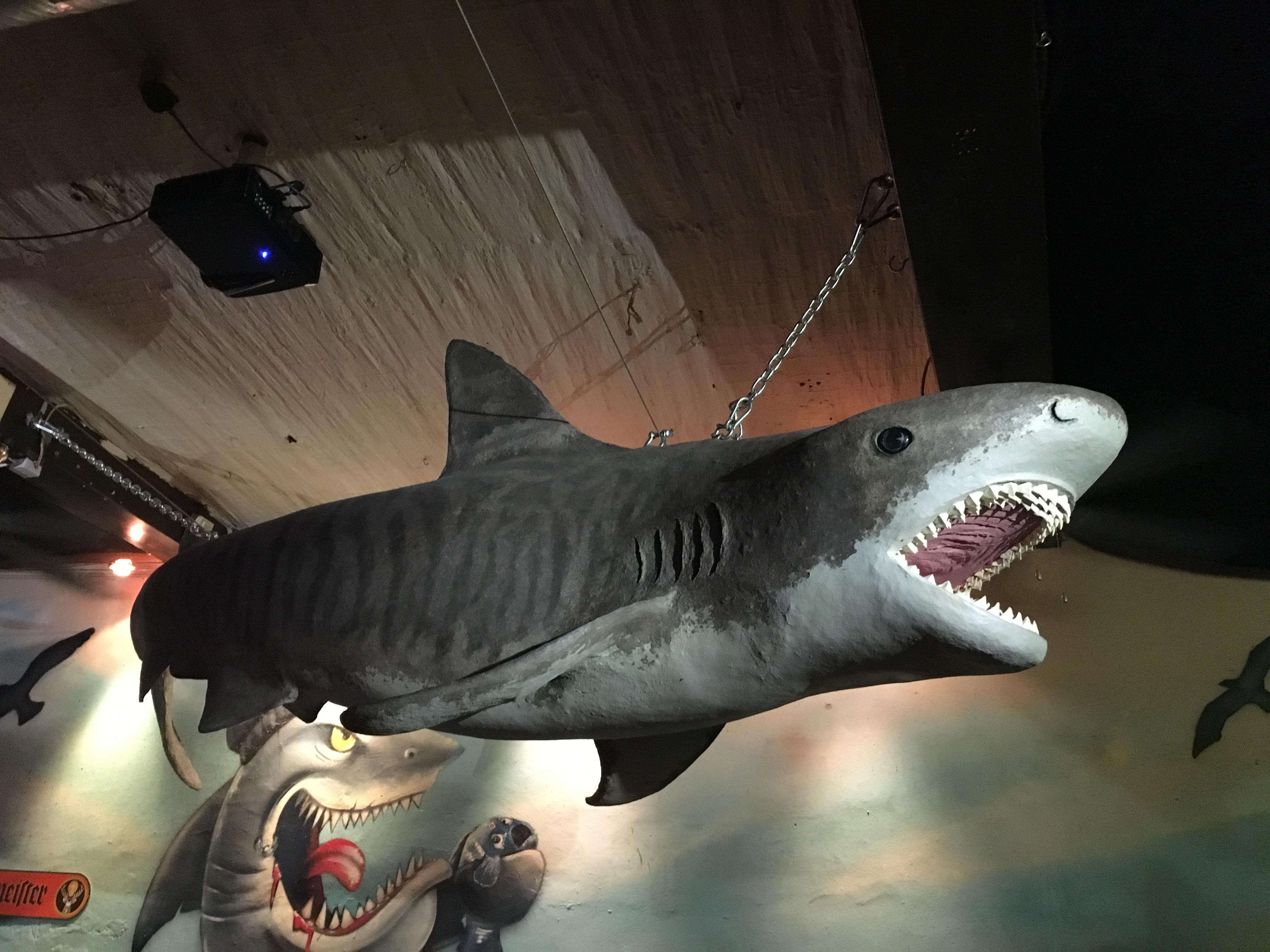 Hai im Haifischbecken